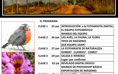 Nuevo Curso AVES + NATURALEZA = FOTOGRAFÍA