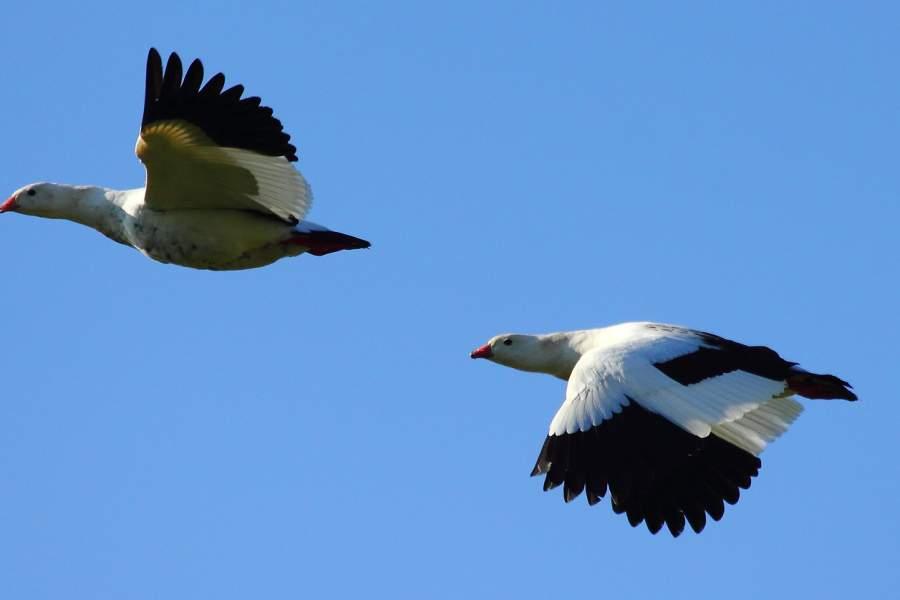 El 19 de octubre es el October Big Day, día en que miles de observadores salen a buscar aves alrededor del mundo, durante 24 horas.