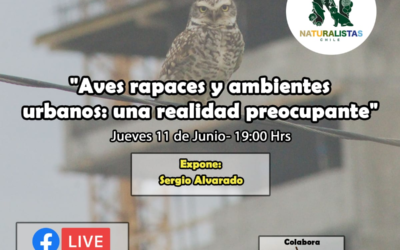 Aves rapaces y ambientes urbanos: una realidad preocupante