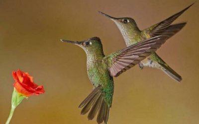 El Radar de Plaza Pauta: aves de ciudad, libros de arquitectura y microespacios