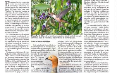 Ambiciosa estrategia busca proteger a todas las aves de Chile