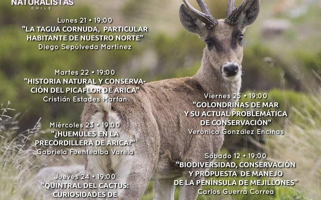 21° Ciclo de charla «Historia Natural y Conservación del picaflor de Arica» Cristián Estades