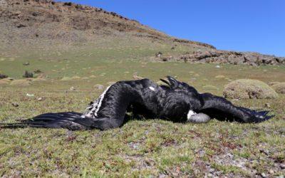 Resolución sobre el parque eólico en Chile