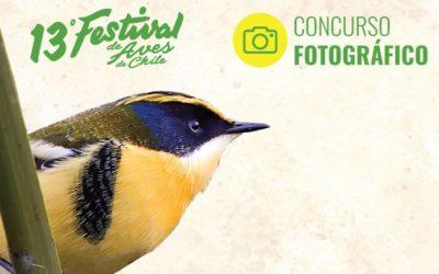 ¡Por fin sabremos quién fue el ganador del Concurso de Fotografía del Festival de Aves de Viña del Mar!